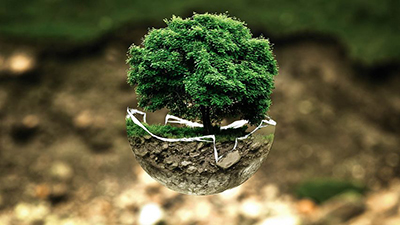 """conova unterstützt als erstes klimaneutrales Rechenzentrum das Aufforstungsprojekt """"VCS Wald Uruguay"""" zum Ausgleich der CO₂ Bilanz und kauft Zertifikate zur Verbesserung des ökologischen Fußabdrucks"""